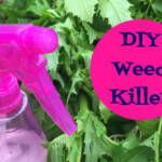 Cleaning Tip Tuesday: DIY Weed Killer