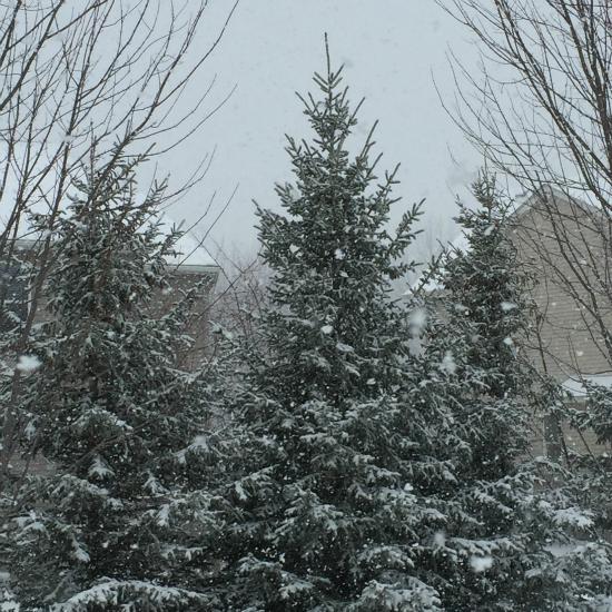 Introducing the Coat Closet Winter Storm
