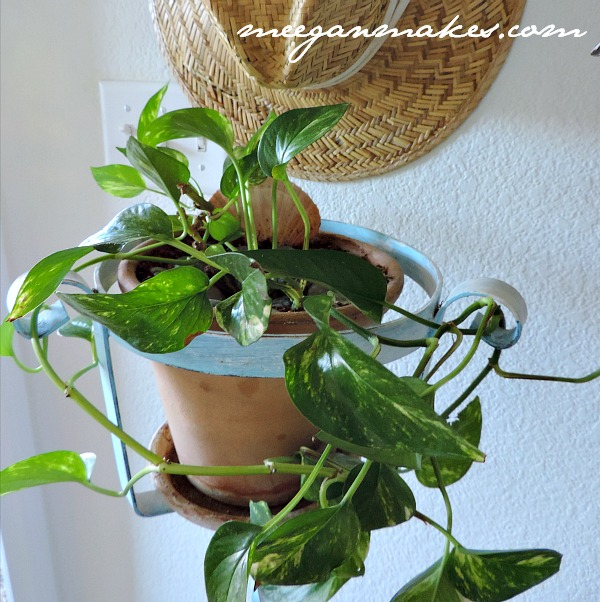 Naturally Clean Household Plants