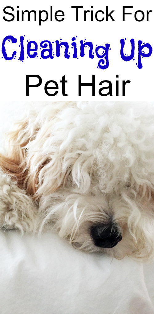My vacuum never pulls up all our pet hair. Love this simple tip for cleaning up the pet hair.