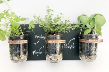 Love this DIY Mason Jar Planter! So cute! #masonjar #planter
